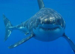 「サメは仲間になりたそう」