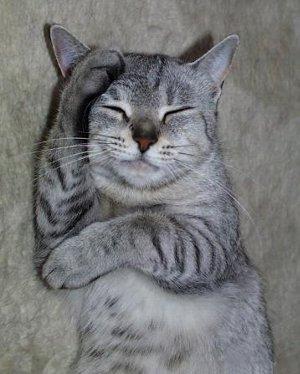 「考える猫」