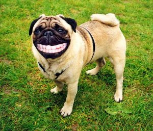 「入れ歯」