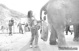 「象のフン」