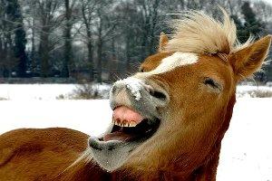 「俺と馬と歯」