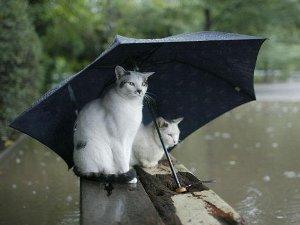 「今日も雨ですね」