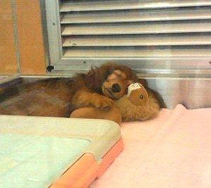 「犬とライオン」