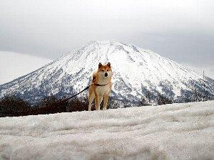 「犬と山」
