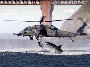 「サメ襲来」