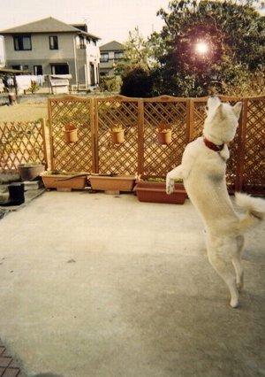 「犬と俺」