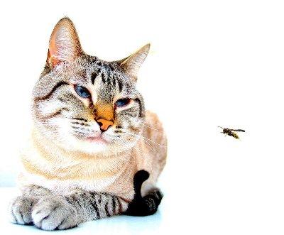 「僕は恐いスズメハチ」