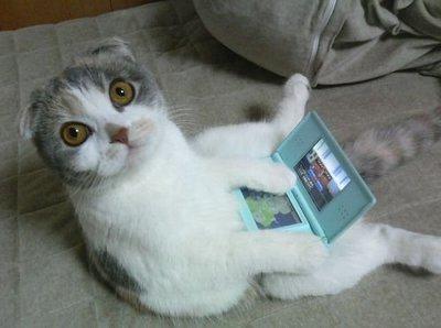 「ネコの日」