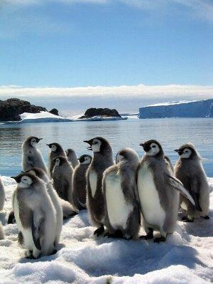 「ペンギン選手宣誓」