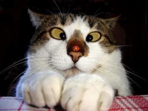「ネコのより目」