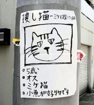 「ネコ探しています」