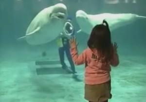 イルカの空気リング
