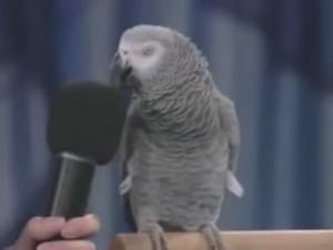 動物の鳴きまねオウム