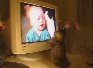 「ネコ動画をみるネコ」
